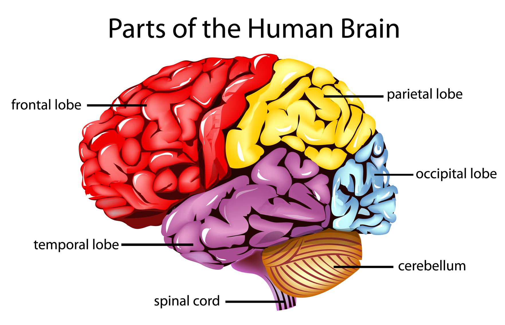 Brain Injury 101 Bist