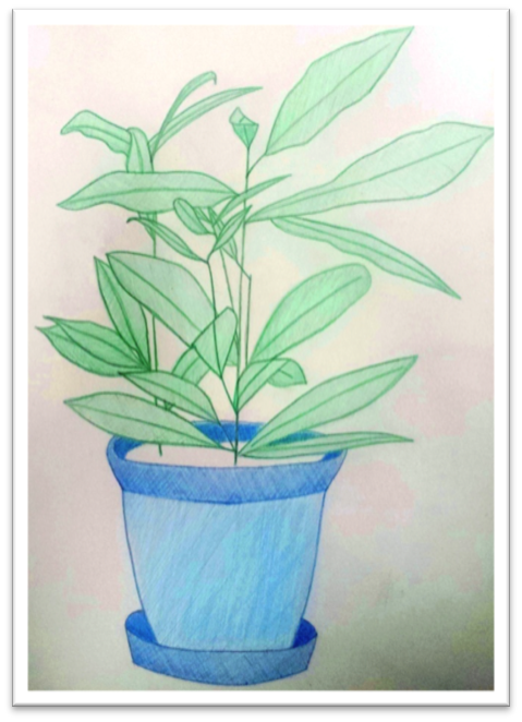 Julia's drawing of a house plant