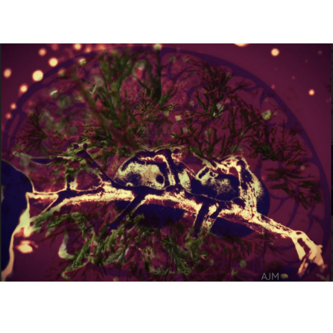 Digital art - close up of a brain scan