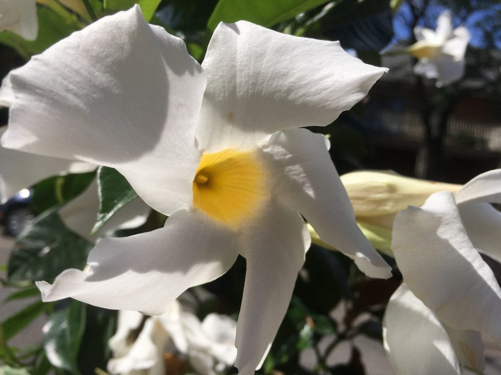 a picture of a wilted white flower