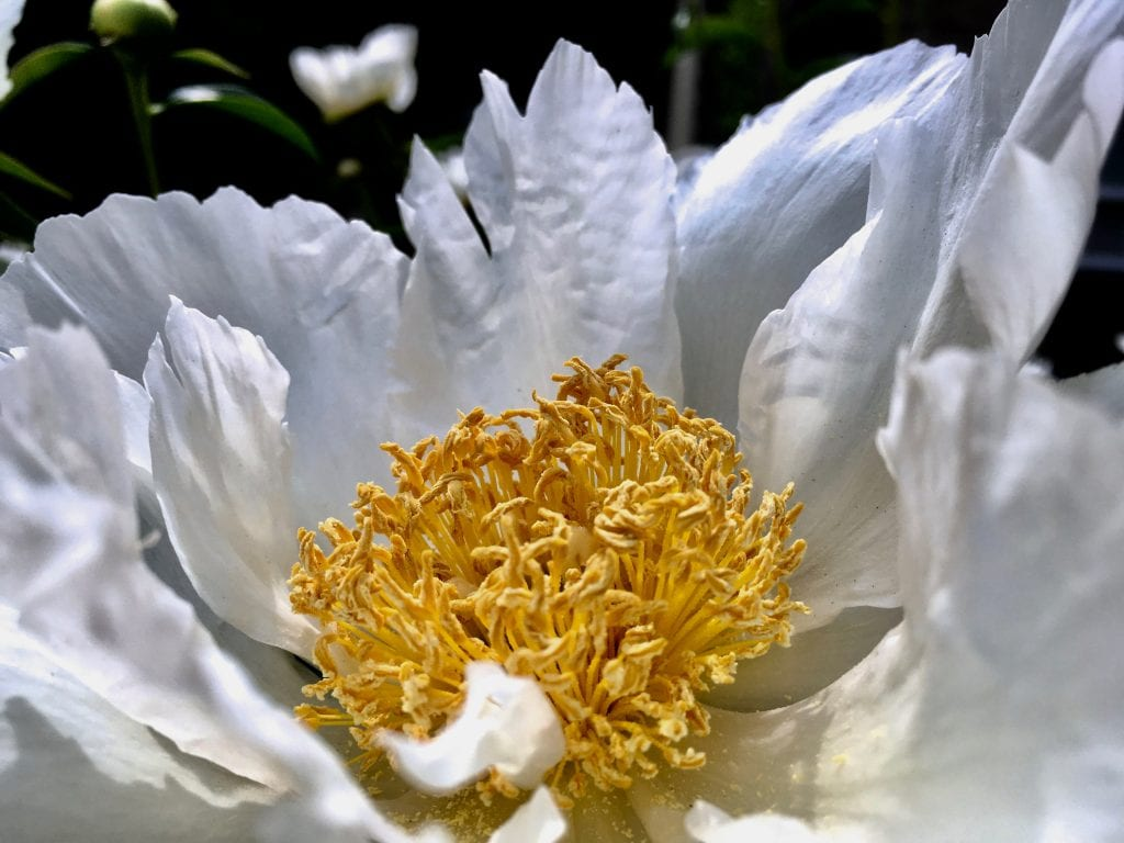Close up of a white flower